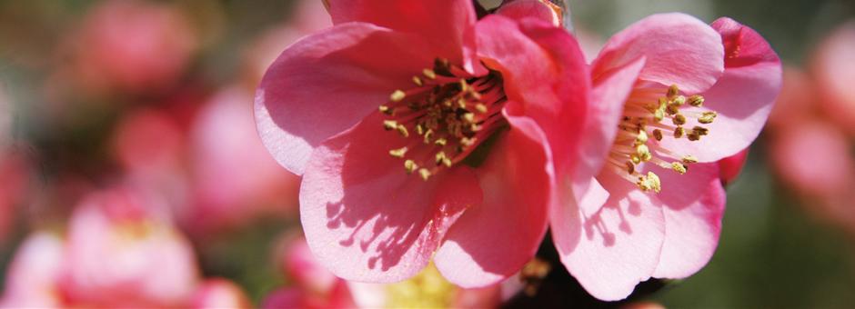 春の萩市佐々並、梅